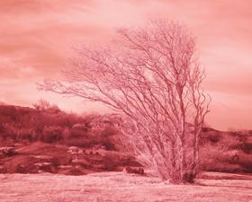 Internet Landscapes: Sweden by Evan Roth